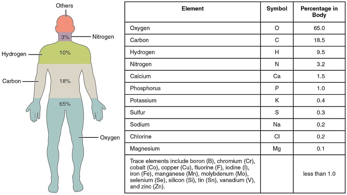 1200px-201_Elements_of_the_Human_Body-01