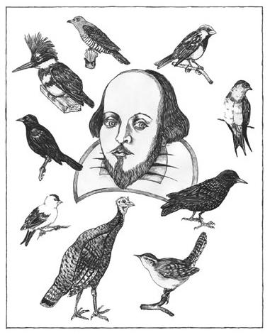 birds-of-shakespeare