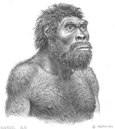 homo-erectus-drawing