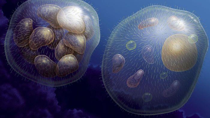 multicellular-organisms-grow_75d4d87b3dd8a968