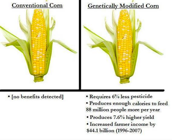 corn-comparison