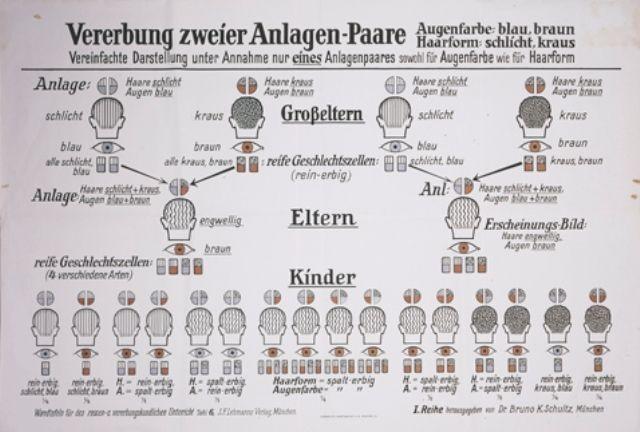 eugenics-chart